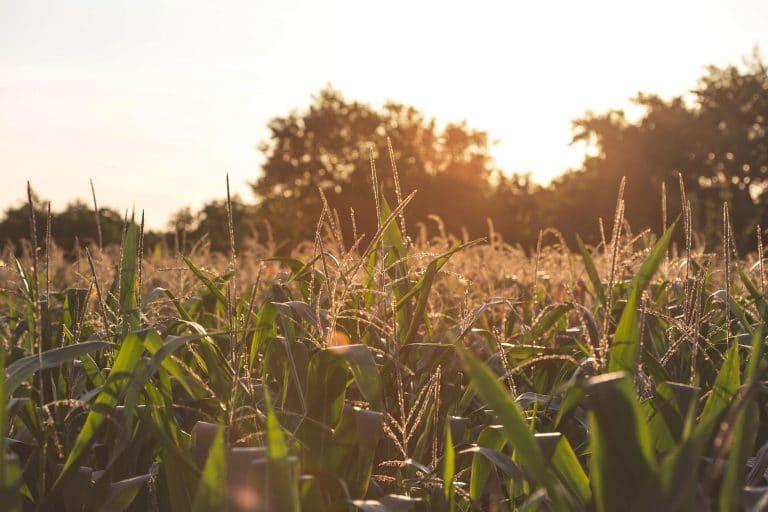 What We Do - Cavaso Farming